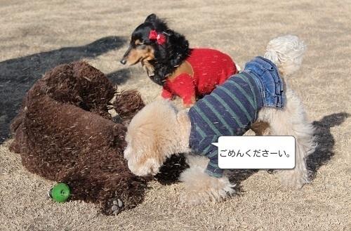 ららぽーと豊洲ドッグラン